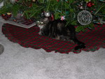 Awwww, Squeak under the tree