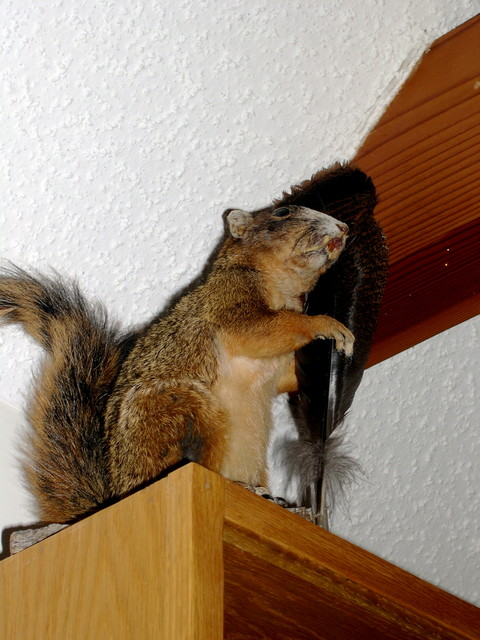 this disturbing squirrel stood watch over the kitchen in our cabin