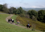 some horses coming down the carriage trail