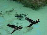Penguin - Ueno Zoo