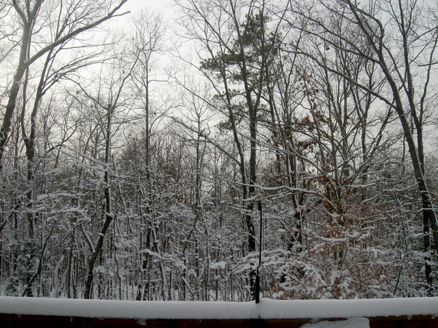Back yard (afternoon 20090120)