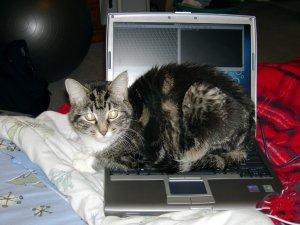 SqueakLaptop20060320.JPG